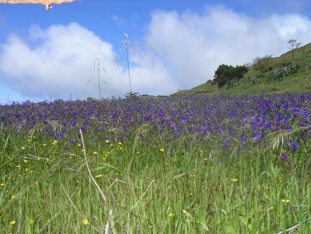 Blumenwiese El Hierro